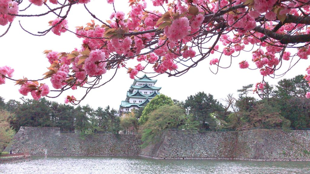 Nagoya Castle with cherry blossoms