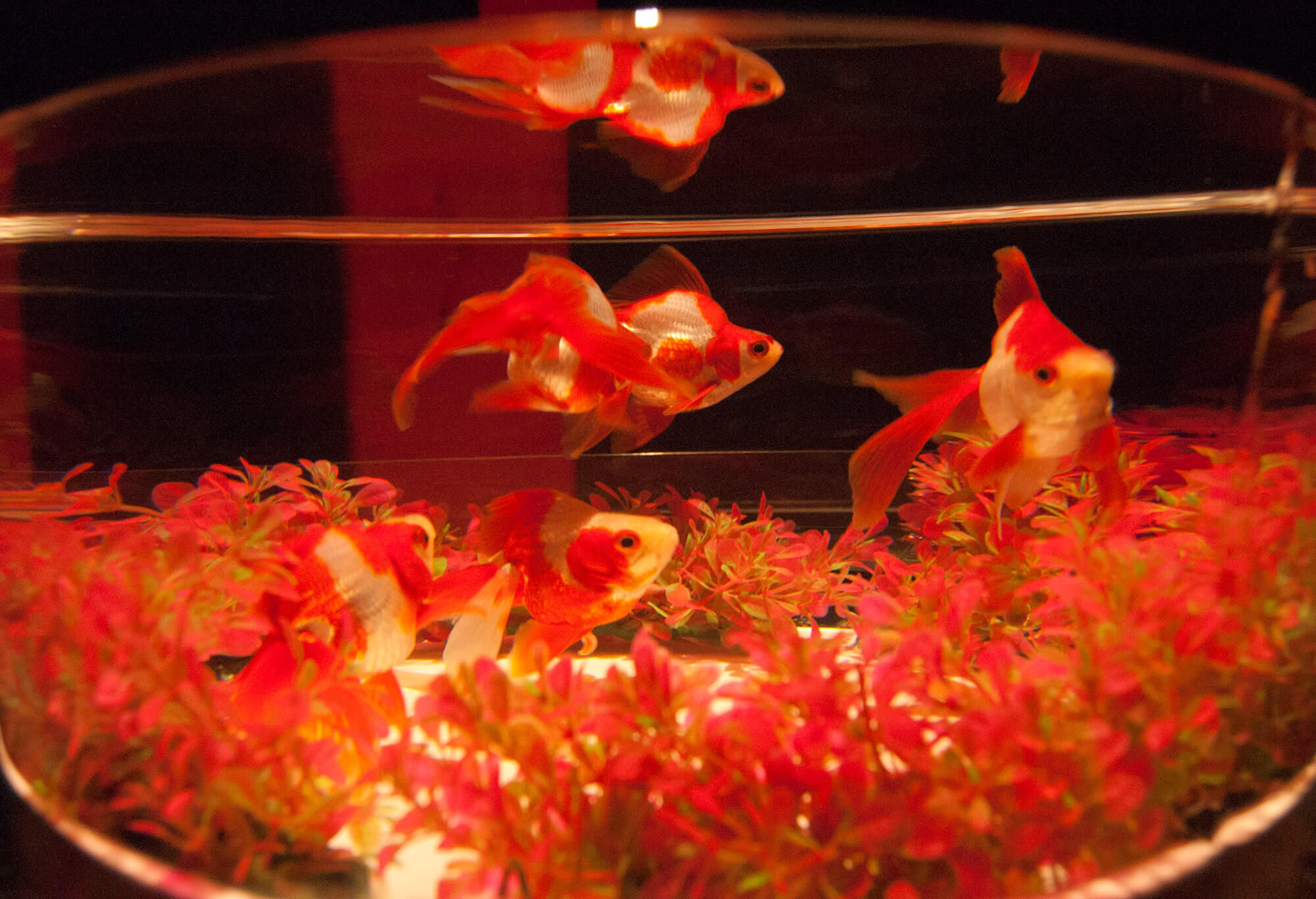 Art Aquarium Nagoya