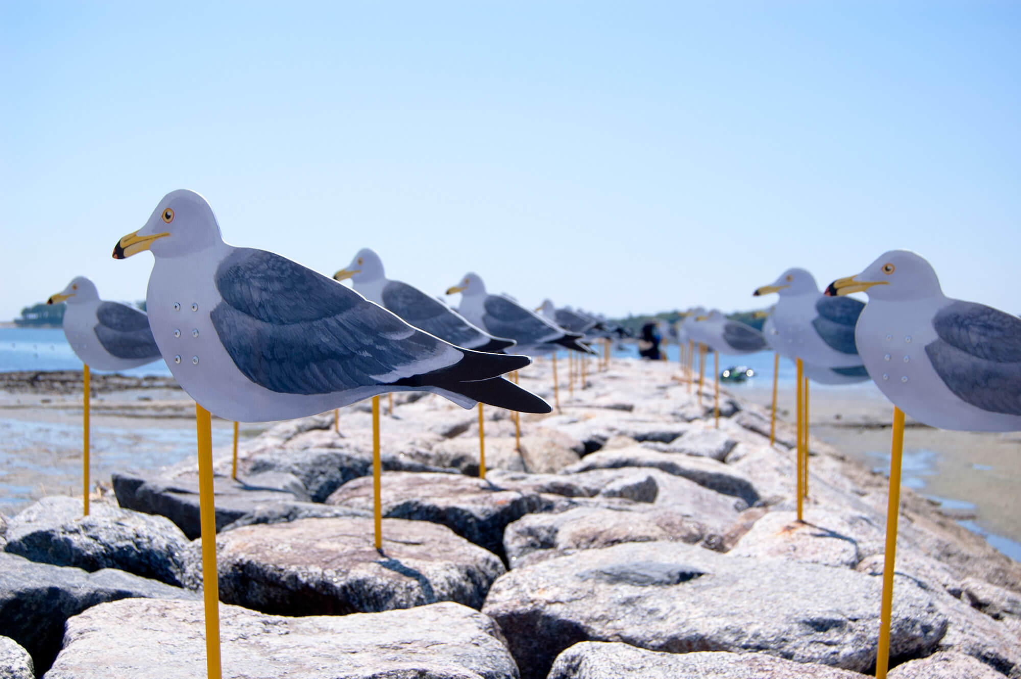 Seagull Parking Sakushima